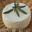 fromage de chèvre frais