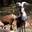 Chèvrerie des Garagaïes