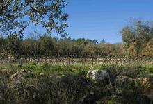 Domaine du Vignaret, famille Tourel