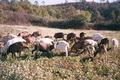 Ferme de la Cabreto, miel et fromage de chèvre