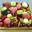 tarte exotique carrée