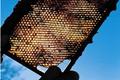 André et Martine Camous : miel, confiture