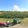 Domaine Ampélidacées, vin de Tahiti