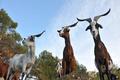 La Pastorale du Regagnas