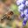 Les ruchers apijouvence