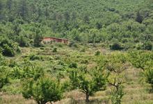 Terra Hozho