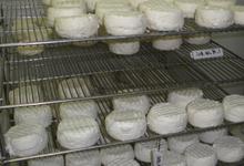 fromages sur grille de séchage