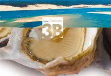 Les Huîtres 3B