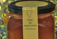 miel de clémentinier