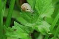 Les escargots d'Armeau, les escarbios d'Armeau