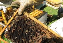 Casalta, Denis et Nancy, le jardin des abeilles