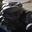 Pleurote huitre (Pleurotus ostreatus)