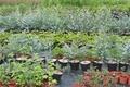 Les Jardins de la Lèze