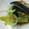 Maquereaux en filets, bulbe de fenouil confit.