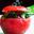 Jeune Tomate Junot,Herbes En Folie