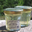 Miel de Rhododendron sauvage des Pyrénées  Bio