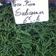 La Salicorne, aussi appelée Passe-pierre