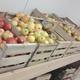 Les Saveurs Du Plan Fruits Et Rosiers