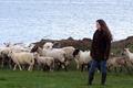 Les agneaux de l'anse du Pouldon