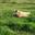 Les Cochons Bio De Lumelen