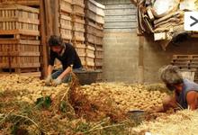 Association PAYZONS FERME, pommes de terre