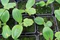Biotope De Kergouaran