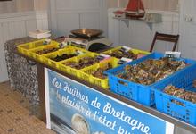 Huîtres et coquillages Y. Congratelle