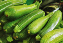 EARL du Magouero, légumes bio