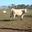 GAEC du Point de Vue, viande bovine
