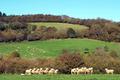 La Bergerie du Squiriou, agneaux de Bretagne
