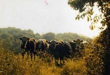 ferme de Kerségalou