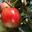 Le Verger Pomme d'Api'zz