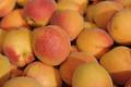 abricot du roussillon