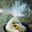 Papillotes d'endive au maroilles et aux fruits secs