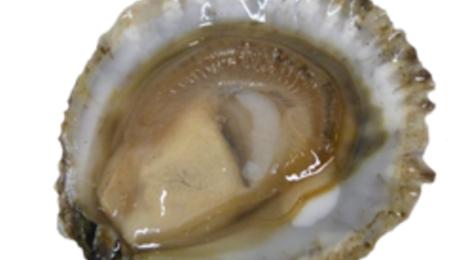 Huîtres plates Belons