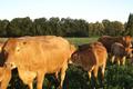 Martine et Jacques Le Clere, viande bovine Limousine