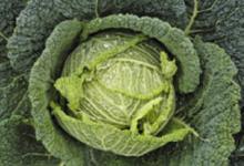 Pierre Yves Guéguen, légumes