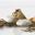 Cônes de crabes à la salicornes