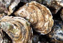 Les Huîtres de Brehuidic