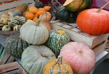 Simone Heidrich, légumes de saison