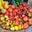 Simone Heidrich, la Yourtilière, légumes de saison