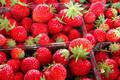 Regis Pichon, fraises