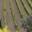 Domaine des terres de Solence