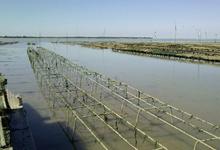 Huîtres Grolleau-lis