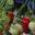 Jardin de la clairette