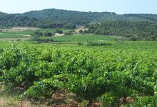 Château Puy