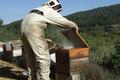Frédéric Garcia, apiculteur
