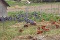 Ferme avicole de la Sauze