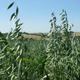 Au Petit Grain Bio
