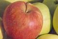 Bories Frères, pommes
